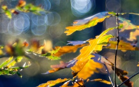 Yellow leaves, autumn, bokeh HD wallpaper