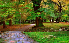 Autumn park, trees, walkway, leaves HD wallpaper