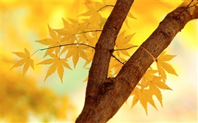 Autumn, yellow leaves, tree branch HD wallpaper