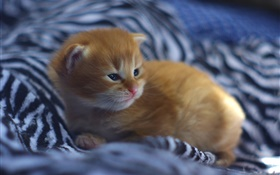 Cute kitten baby in bed