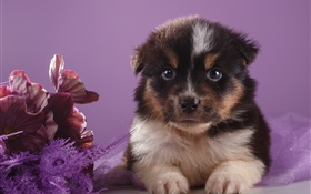 Cute puppy and flowers HD wallpaper