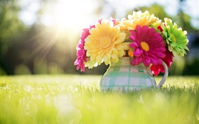 Flowers close-up, gerbera, vase, grass, sunlight HD wallpaper