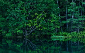 Forest, trees, thicket, lake HD wallpaper