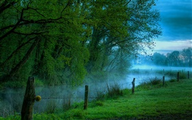 Morning nature scenery, meadow, grass, river, fog HD wallpaper