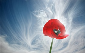 One red poppy flower, sky, clouds HD wallpaper