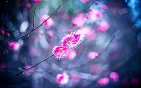 Pink plum flowers HD wallpaper