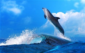 Sea animals, dolphin, jump, ocean HD wallpaper