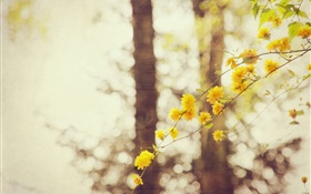 Yellow flowers, twigs, tree, bokeh HD wallpaper
