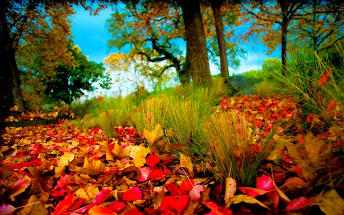 Autumn, red yellow leaves on ground Wallpapers Pictures Photos Images