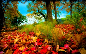 Autumn, red yellow leaves on ground HD wallpaper