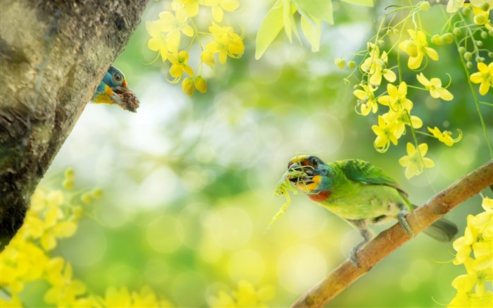 Bird catch insect, flowers, tree Wallpapers Pictures Photos Images