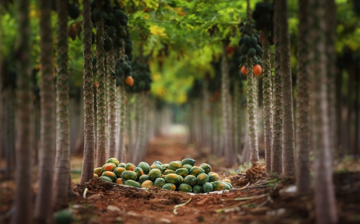 Fruits harvest, garden, trees Wallpapers Pictures Photos Images