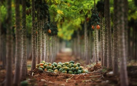 Fruits harvest, garden, trees