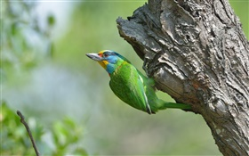 Green feathers bird, tree HD wallpaper