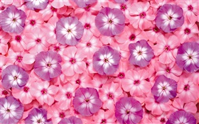 Many pink flowers, petals HD wallpaper