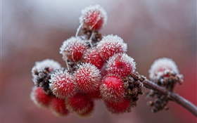 Red berries, crystals, ice, frost HD wallpaper