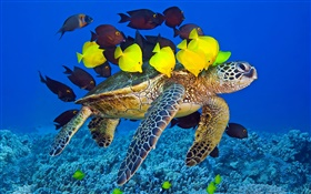Turtle underwater, sea, tropical fish