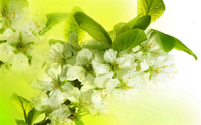 White apple flowers, flowering, twigs, spring Wallpapers Pictures Photos Images