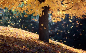Autumn, single tree, yellow leaves HD wallpaper