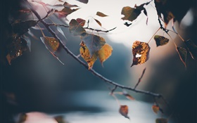 Autumn, twigs, yellow leaves, blurry background HD wallpaper