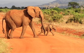 Elephants at savanna