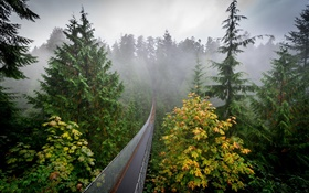 Forest morning, trees, fog, suspension bridge