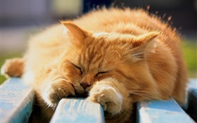 Furry cat in sleeping HD wallpaper