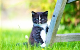 Furry pet, black kitten in the lawn HD wallpaper