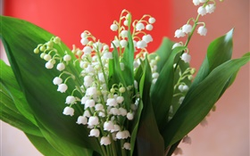 Lily of the valley, white flowers, green leaves