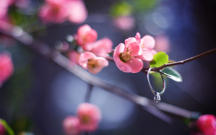 Pink flowers twigs, spring, diamond ring Wallpapers Pictures Photos Images
