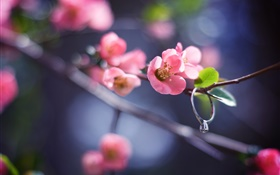 Pink flowers twigs, spring, diamond ring HD wallpaper