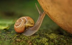 Snail close-up, insect HD wallpaper