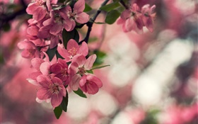 Spring, pink flowers, tree, bokeh HD wallpaper
