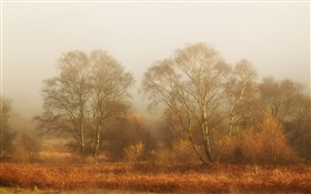 Trees, autumn, fog, morning