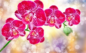 Beautiful pink flowers, phalaenopsis HD wallpaper