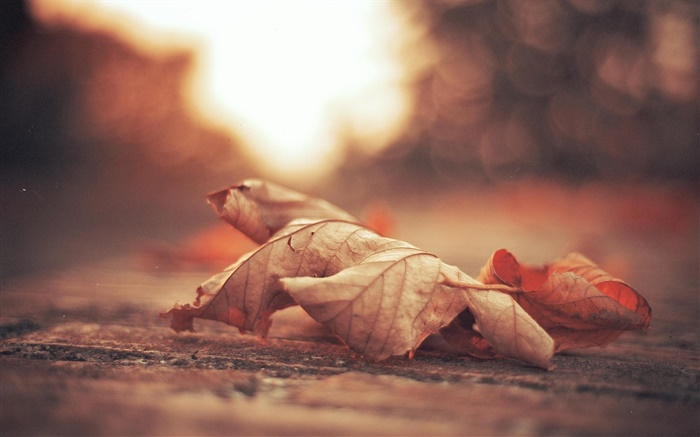 Dry leaf, road, autumn Wallpapers Pictures Photos Images