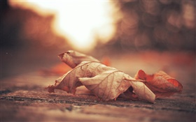 Dry leaf, road, autumn HD wallpaper
