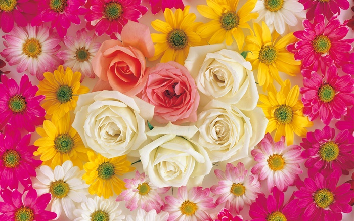Many flowers, rose, chamomile Wallpapers Pictures Photos Images
