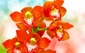 Orange petals orchid HD wallpaper
