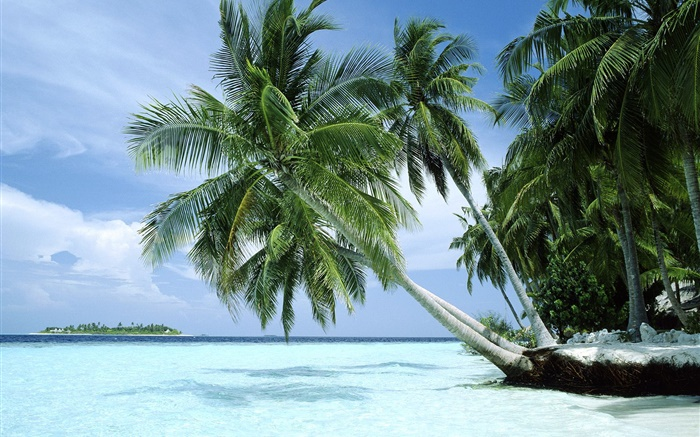 Palm trees, sea, coast Wallpapers Pictures Photos Images