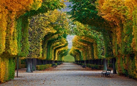 Park, trees, road, bench, autumn