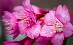 Pink flowers macro photography, pistil