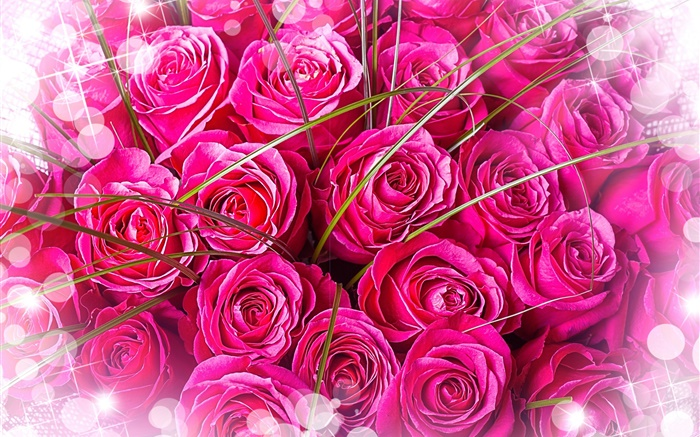 Pink roses, bouquet, glare Wallpapers Pictures Photos Images