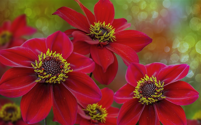 Red flowers macro photography, petals, pistil Wallpapers Pictures Photos Images