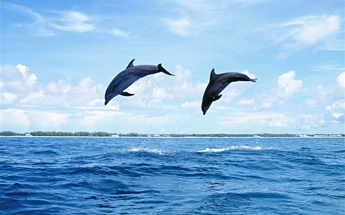 Sea animals, dolphins, jumping Wallpapers Pictures Photos Images