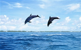 Sea animals, dolphins, jumping HD wallpaper