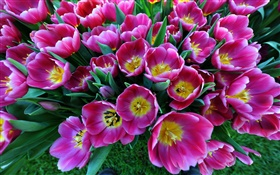 Spring flowers, purple tulips