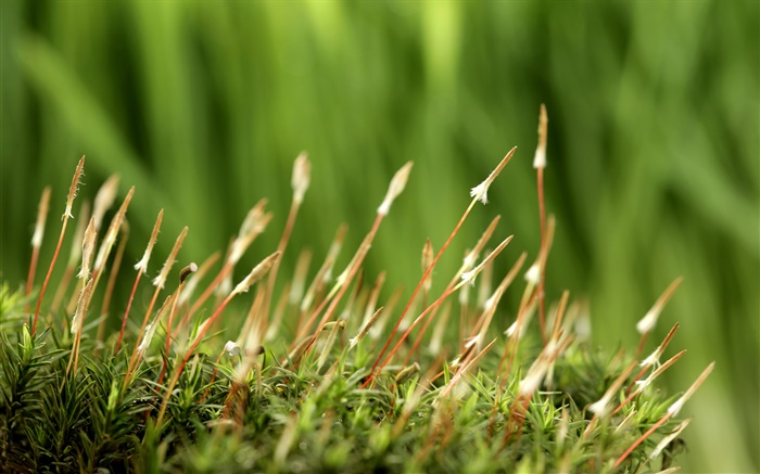 Spring, grass, green background Wallpapers Pictures Photos Images