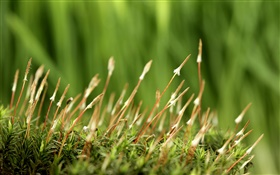 Spring, grass, green background