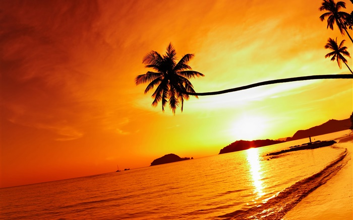 Tropical beach sunset, palm tree, Thailand Wallpapers Pictures Photos Images
